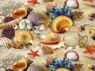 沙滩上面的五彩贝壳桌面壁纸