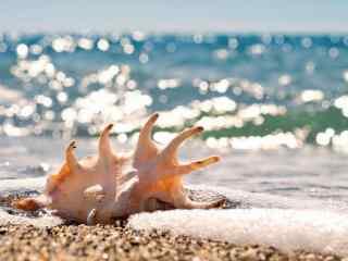 浪漫海边的贝壳桌面壁纸