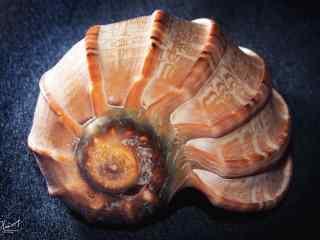 唯美好看的贝壳桌面壁纸