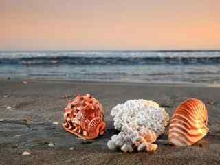 夕阳下的贝壳沙滩桌面壁纸