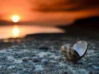 夕阳下沙滩边上的贝壳桌面壁纸