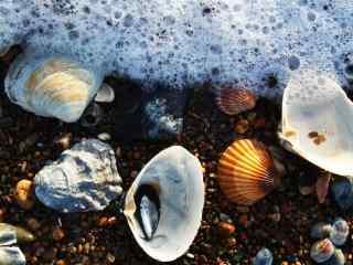 被海水冲刷的贝壳桌面壁纸