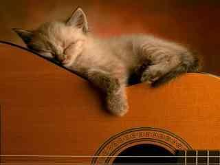 猫咪趴睡在吉他上桌面壁纸