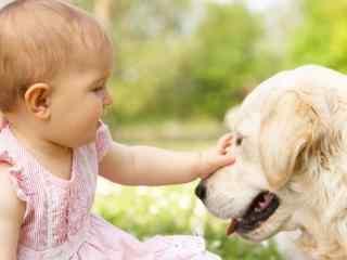 萌萌哒可爱小宝宝与金毛桌面壁纸