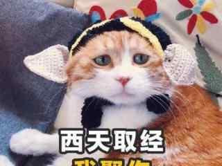 可爱猫咪土味情话