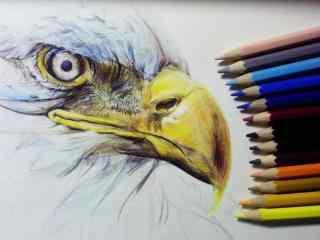 铅笔手绘老鹰图片桌面壁纸
