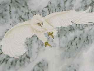 白色羽毛的老鹰图片中国话作品