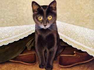 床底下的猫咪手绘壁纸