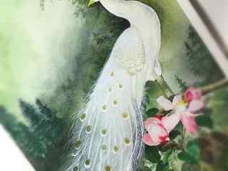 手绘纯洁白色的孔雀桌面壁纸