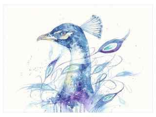 手绘好看的蓝孔雀桌面壁纸