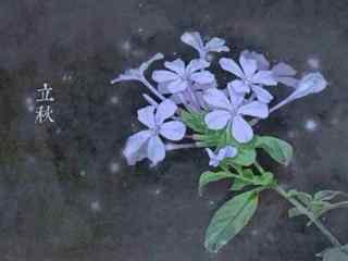 美丽的手绘立秋桌面壁纸