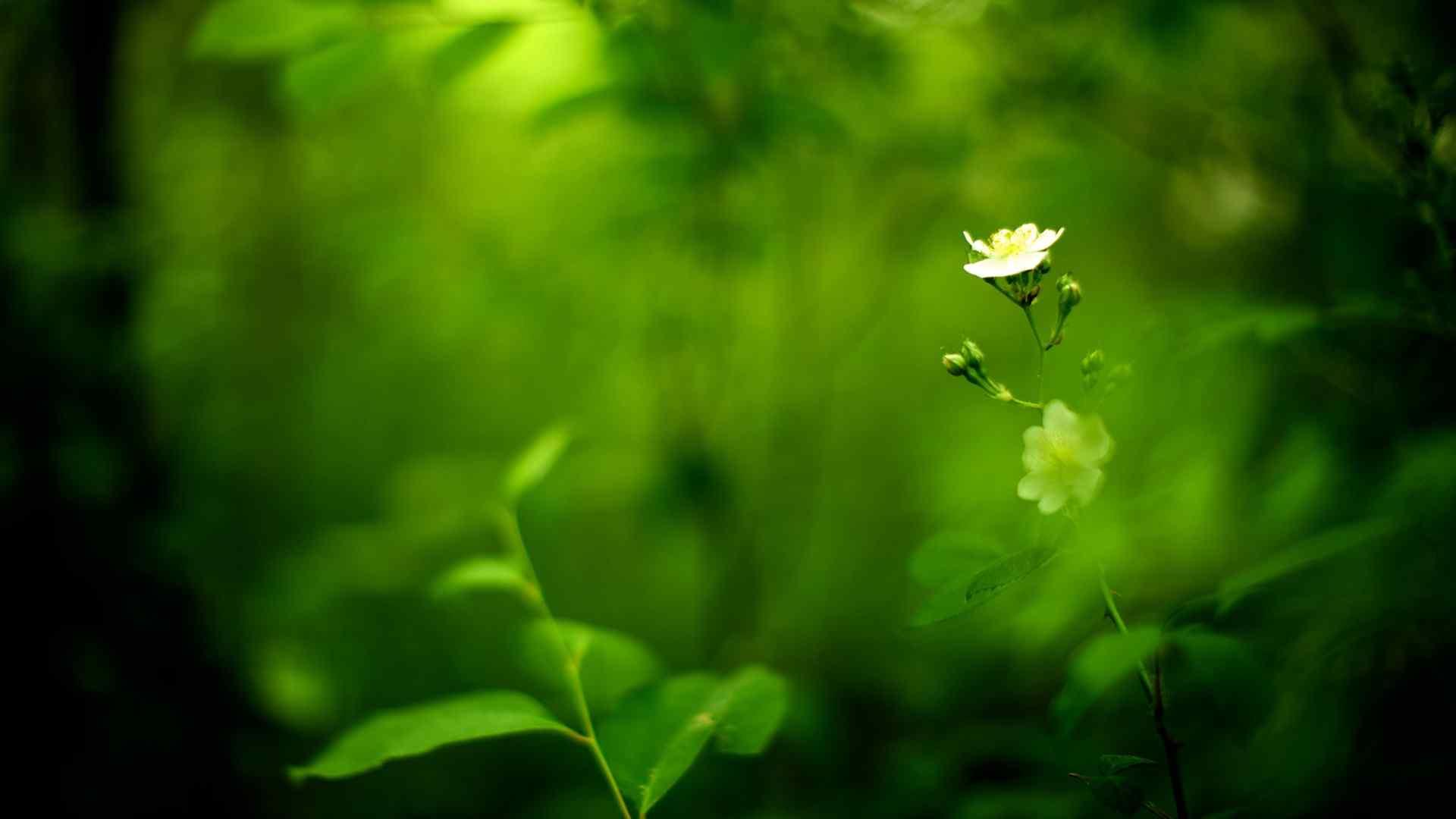 香港公园绿色植物