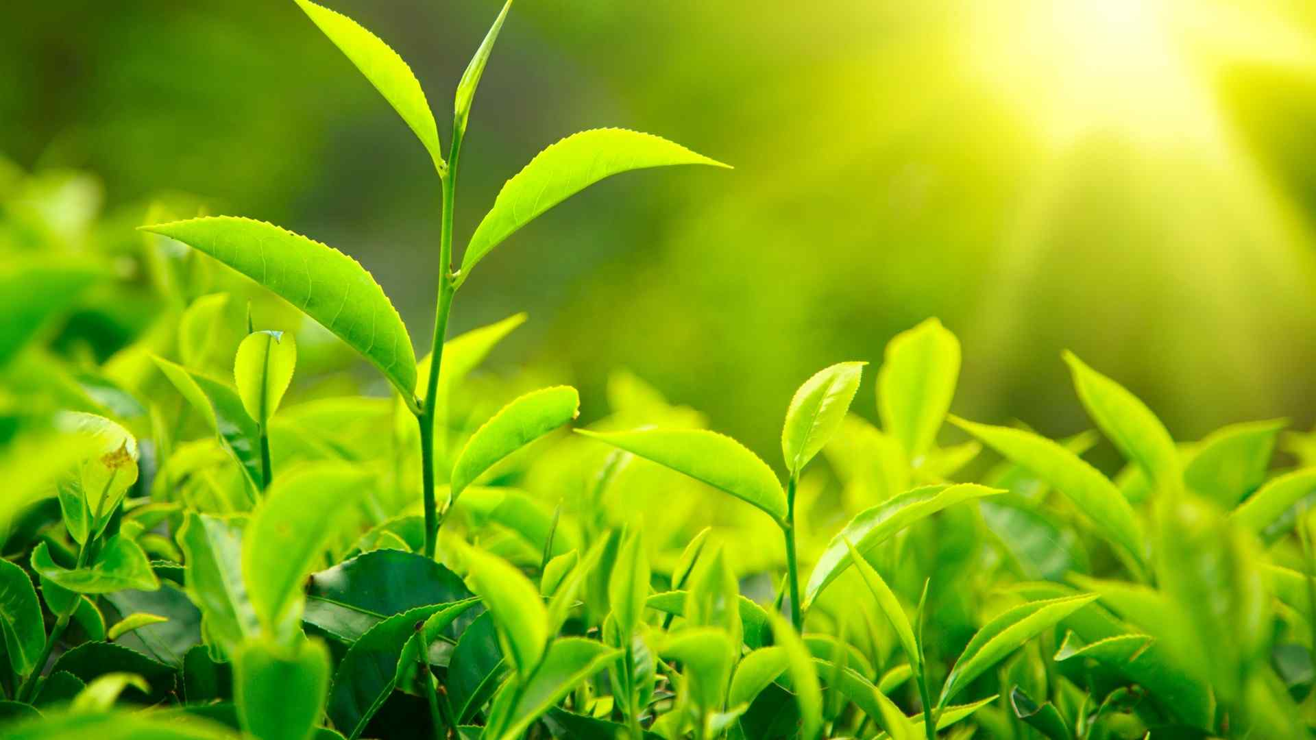 好看的绿色植物4