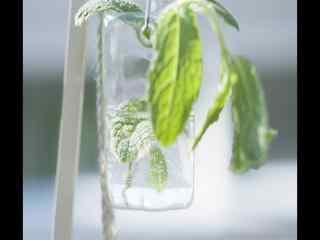 室内水平中生长盆栽风景桌面壁纸