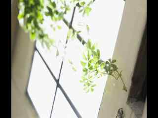 室内绿藤植物盆栽风景桌面壁纸
