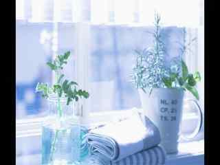 室内透过阳光盆栽风景桌面壁纸