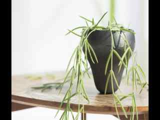 室内垂枝绿叶植物盆栽风景桌面壁纸