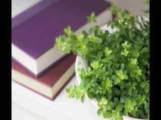 绿色护眼室内盆栽风景桌面壁纸