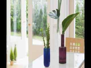 室内餐桌饰品小盆栽风景桌面壁纸
