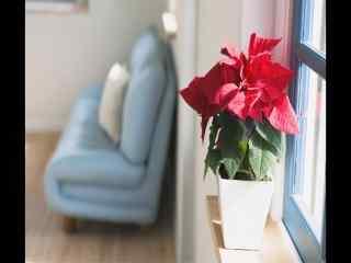 室内沙发窗台红花盆栽风景桌面壁纸