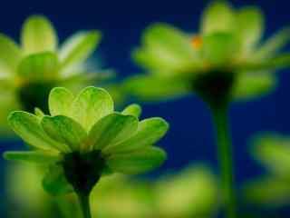 清新绿色植物护眼