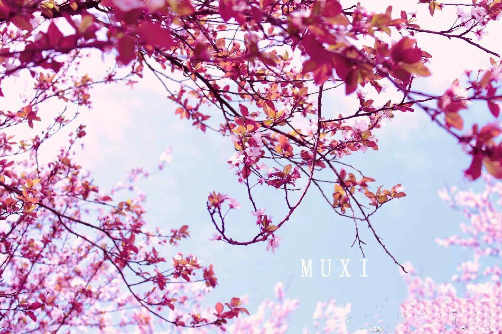 桃花绍兴著名景点吼山桃花林桌面壁纸