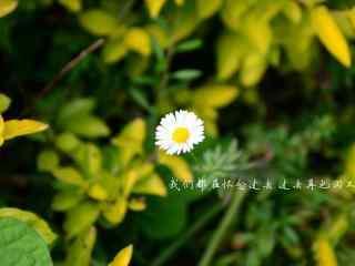 唯美花朵抒情文字