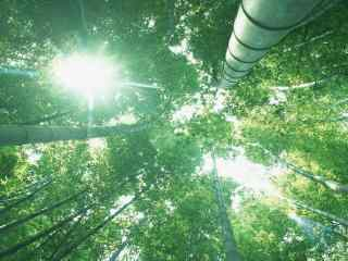 竹子摄影不一样的角度桌面壁纸