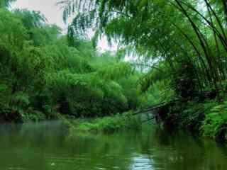 竹子倒入清澈水中桌面壁纸