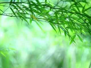 竹子唯美竹叶小清新护眼桌面壁纸