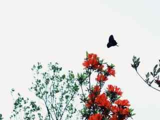 唯美文艺蝶恋花之杜鹃花桌面壁纸