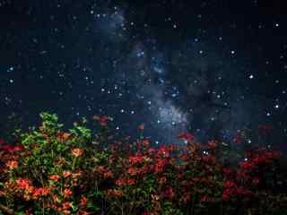 唯美星空下的美丽杜鹃花桌面壁纸