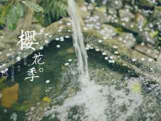 唯美文艺樱花季桌面壁纸