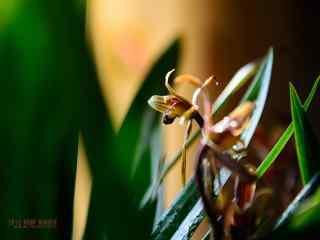 小清新墨兰花植物壁纸