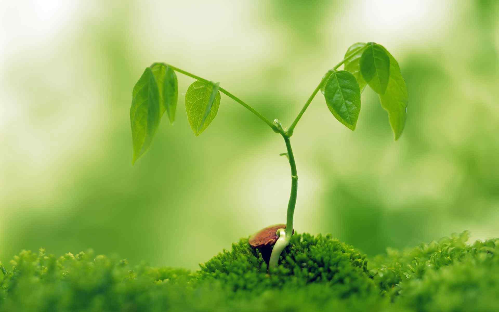 绿色护眼植物桌面壁纸(5张)