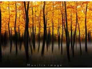 秋日银杏林创意摄影图片桌面壁纸