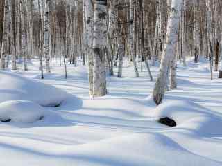 雪景中的白桦林桌面壁纸