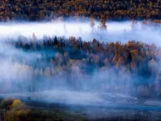 晨雾中的白桦林桌面壁纸
