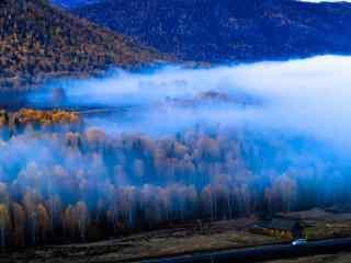 云雾缭绕的白桦林桌面壁纸