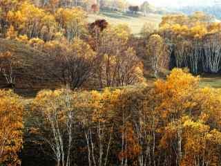 秋日童话之白桦林桌面壁纸