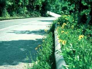 路边盛开的黄色格