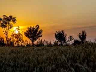 唯美暖色调麦田风景桌面壁纸
