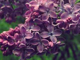 花的图片唯美紫色