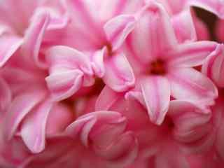 花的图片好看的粉