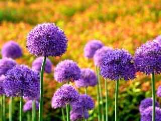 花的图片好看的紫
