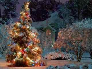 落满雪的圣诞树图片桌面壁纸