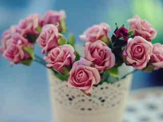 唯美盆栽花朵静物