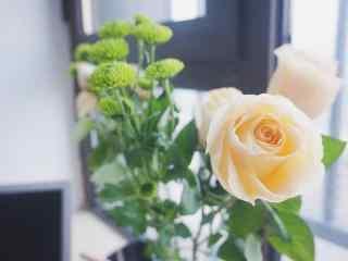 一朵香槟玫瑰简约