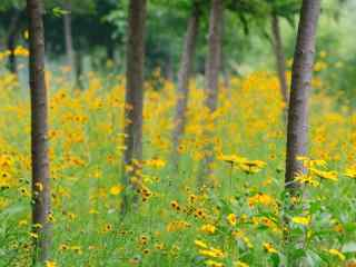 森林里的小黄花桌面壁纸