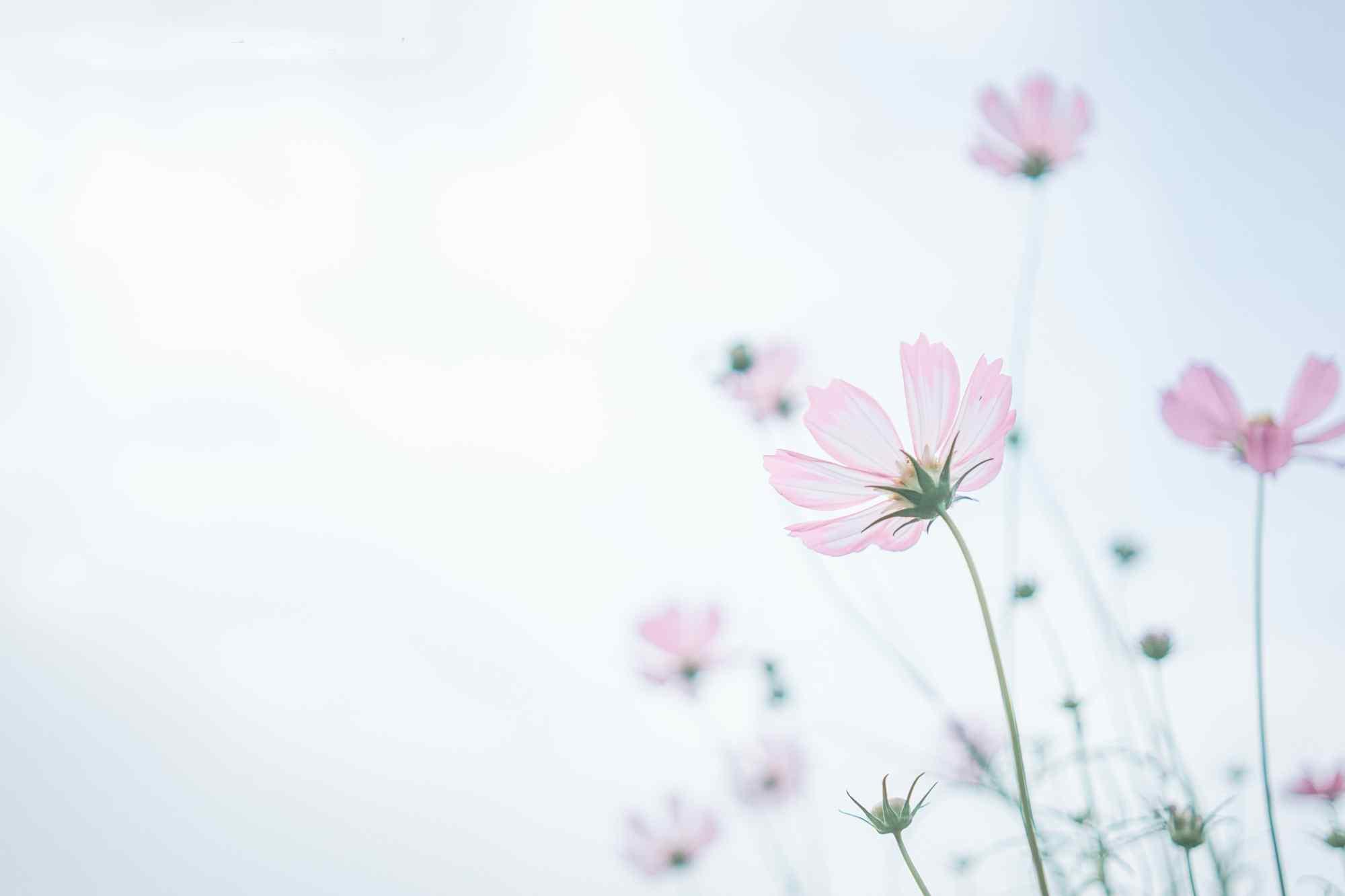 唯美花朵图片桌面壁纸